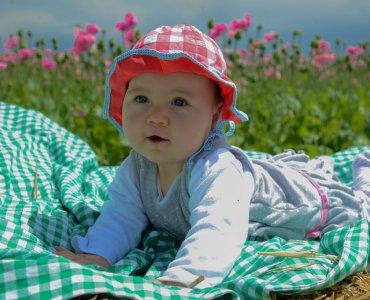 Mohnblüte Germerode_13